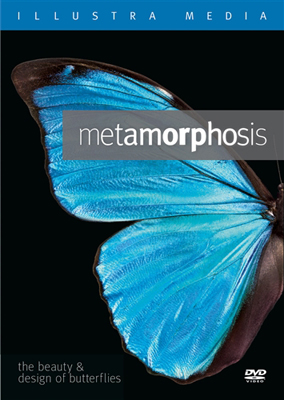Metamorphosis: The Beauty and Design of Butterflies DVD