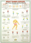 Legs, Trunk, Shoulder and Arm Muscles Chart
