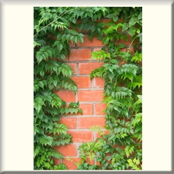 "Vinyl Door Mural ""Bricks & Vine"" - Fire-Rated"