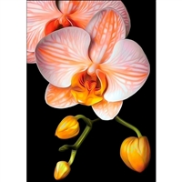 D'Art Diamond Embroidery - Graceful Orchid