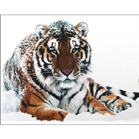 D'Art Diamond Embroidery - Tiger On The Snow