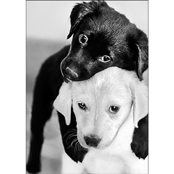 D'Art Diamond Embroidery - Black And White Puppies