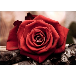 D'Art Diamond Embroidery - Red Rose