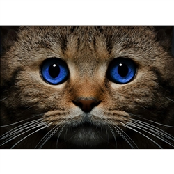 D'Art Diamond Embroidery - Blue-Eyed Cat