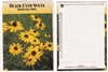 Black Eyed Susan Flower Seed Packets - Blank