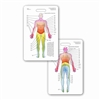 Dermatome Diagram Vertical Badge Card