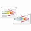 Dermatome Diagram Horizontal Badge Card
