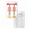 Lund and Browder Chart Vertical Badge Card