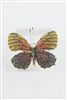 Crystal Accent Butterfly Brooch PA3144