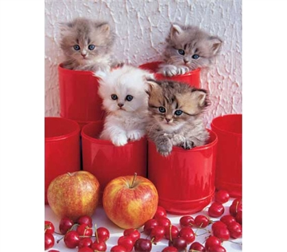 Cute Kittens in Pots Poster