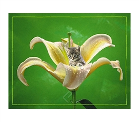 Kitten in Flower with Dew Poster Artwork