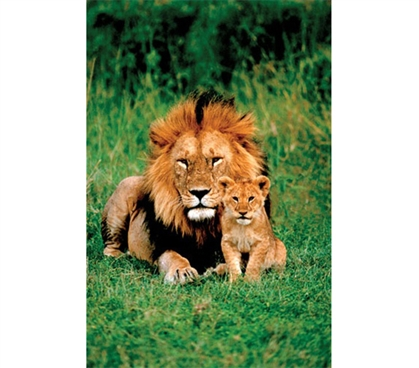 Lion and Baby Poster- College Wildlife poster great for dorm wall