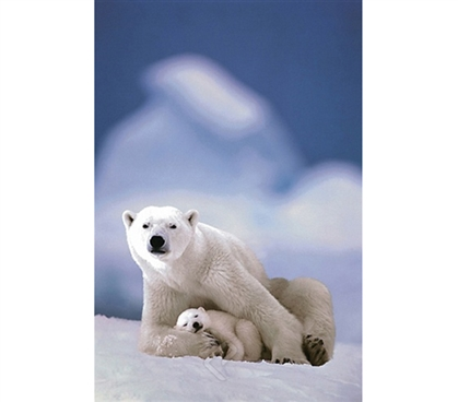 Wild North Pole Polar Bear and Baby Poster