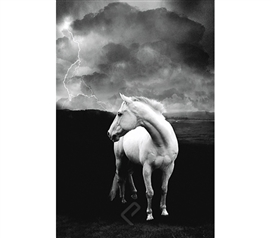 Beatutiful White Stallion in Storm Poster