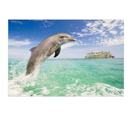 Decorate Your Dorm - Dolphins Jumping In Mediterranean - Poster Essential - Pretty Wall Decor