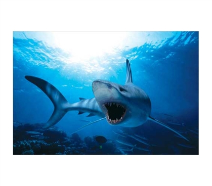 Enhance Your Dorm Decor - Shark Swimming - Bright Blue Water Poster - Cool Animal Poster
