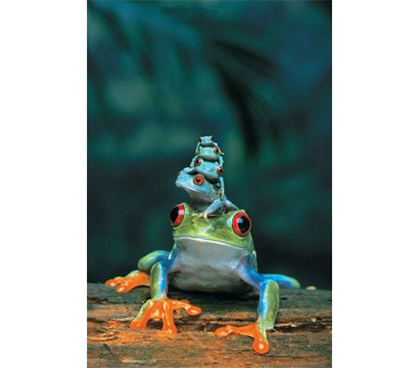 Red-Eyed Tree Frog, Mother and Babies Poster- wildlife inspired dorm room poster showing mother tree frog with babies on her head