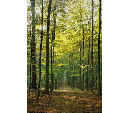Bring Some Trees To Your College Decor - Forest Path Poster - Brings A Natural Poster To Your Dorm