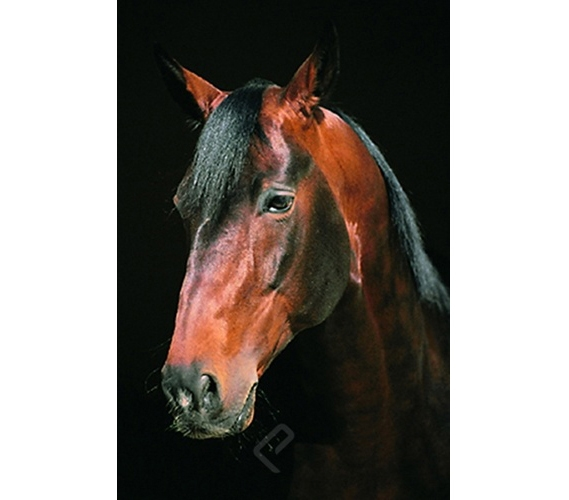 Horse Close Up Dorm Room Poster