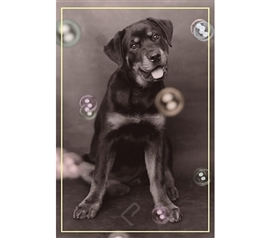 Loyal Dog with Bubbles Poster