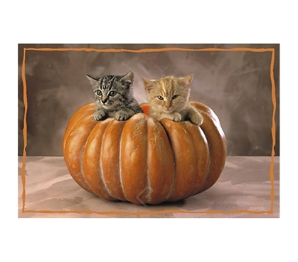 Cute & Cuddly Kittens in Squash Poster