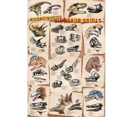 Dorm Decorating Essential - Dinosaur Skulls Reconstructed Poster - Cool Historical Poster