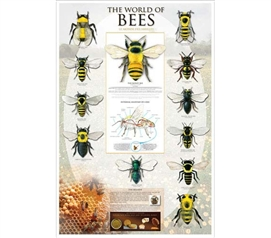 Smart Poster For College - World of Bees Poster - Dorm Room Decoration