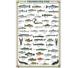 Dorm Room Supplies - Fresh Water Fish Poster - Smart Poster For College