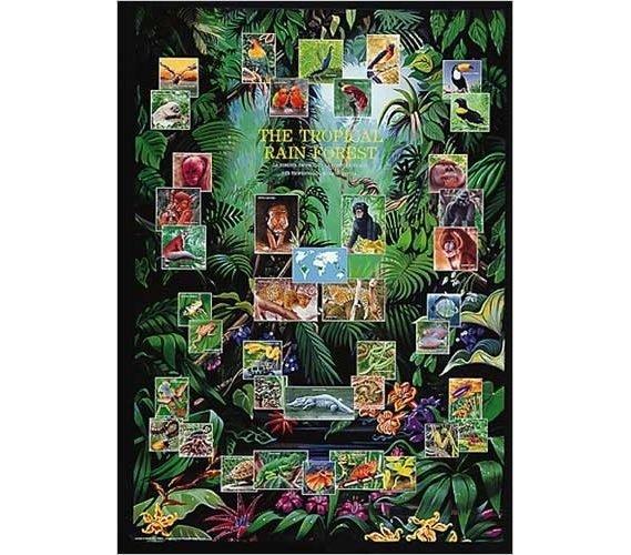 tropical decorations on bed tropical home decor ideas.htm tropical rain forest animal collage decor idea cool dorm poster  tropical rain forest animal collage