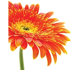 Wall Decor For College - Daisy Wall Art - Peel N Stick - Make Your Dorm Look Great