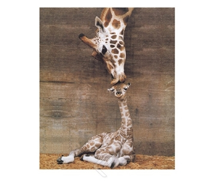 Giraffe - First Kiss College Dorm Room Poster for decorating dorm walls shows cute giraffe and giraffe baby