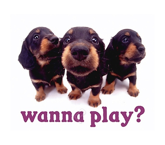 Quot Wanna Play Quot Puppy College Dorm Poster Dorm Room Size