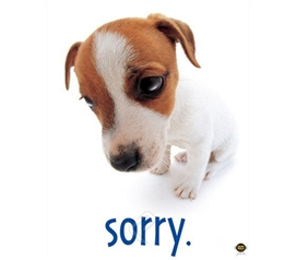 """Sorry"" Dog Cute College Dorm Room Poster college room decorating poster shows guilty puppy you must forgive"