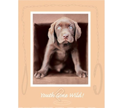 """Youth Gone Wild"" Dog College Dorm Poster cute dorm poster shows brown puppy dog going wild and melting hearts"