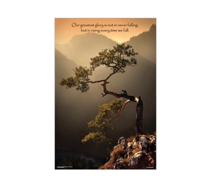 Sokolica Tree Dorm Room Poster Dorm Room Decorations College Wall Decor