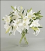 Simply Pure White Lilies
