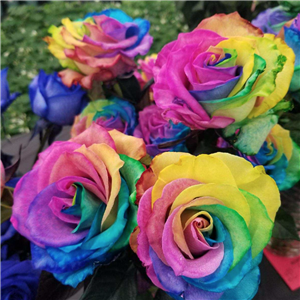 Dozen Rainbow Roses in Vase