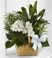 Gentle Thoughts Basket
