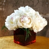 Winter White Peonies