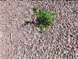 "Barkwood Gravel 1/2"" Screened - Landscape Supply"