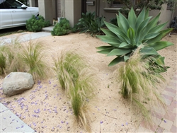 "California Gold Fines 1/4"" Minus - Landscaping Rocks"