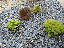 "Chili Bar Slate Stone Chips 1"" to 3"" - Landscape Gravel"