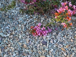 "Imperial Del Rio River Cobble and Pebbles 1"" x 1-1/2"""