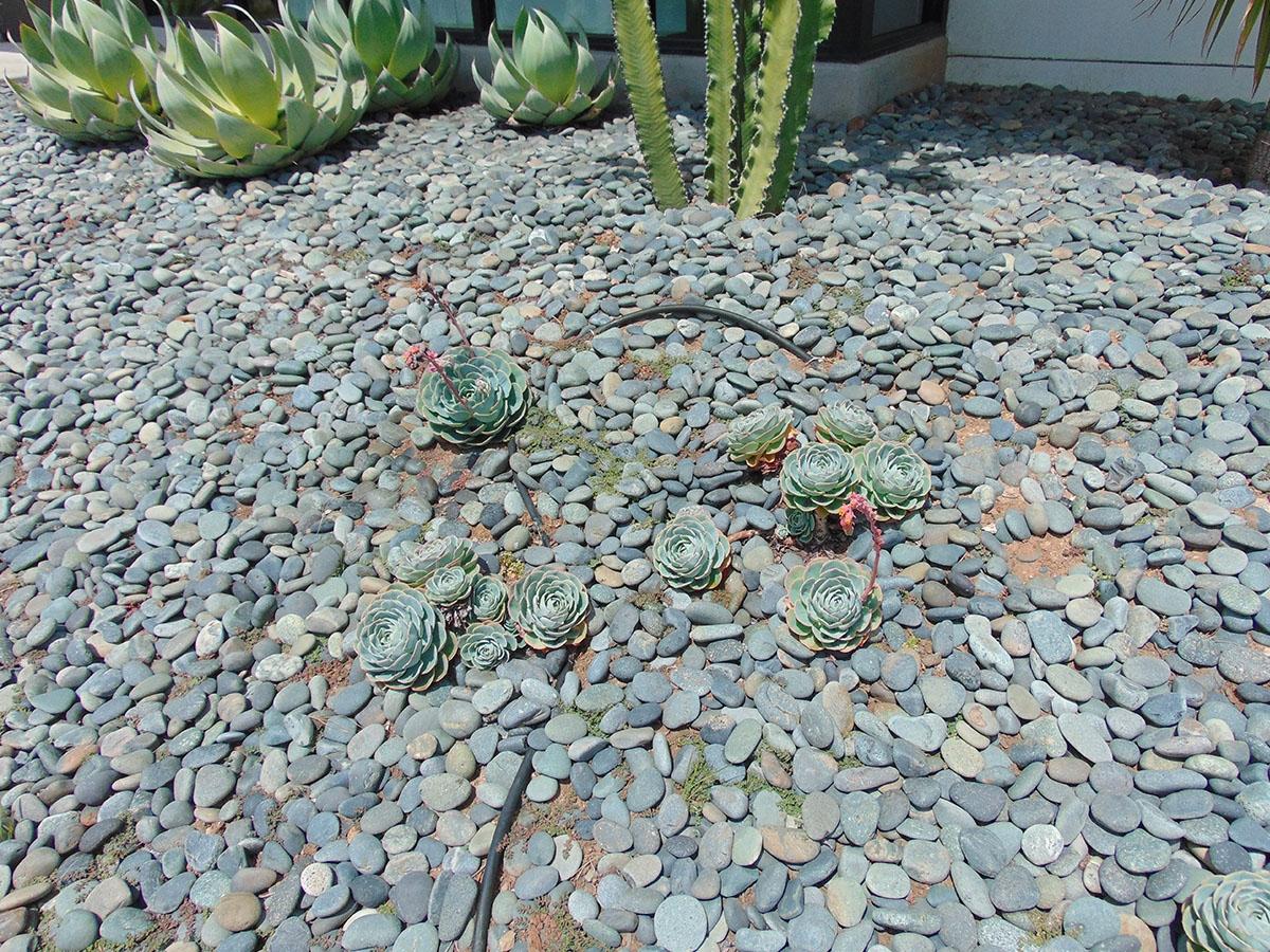 Black Mexican Beach Pebble La Paz 1 2 Quot 1 Quot Quarry Fast