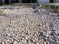 "Buff Mexican Beach Pebble 3"" - 5"" Bulk"