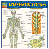 "<span style=""font-weight: bold;""><span style=""text-decoration: underline; color: rgb(0, 89, 156);"">Lymphatic System Laminated Guide</span></span>"