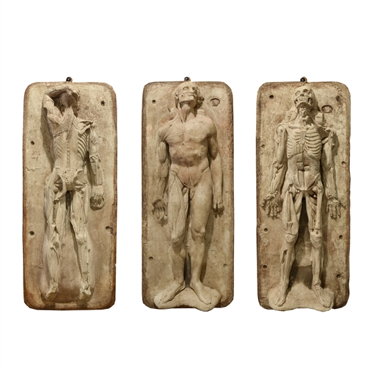 Set of Three 19th Century French Anatomical Models