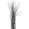 Birch twig, 3-4 ft