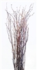 Birch twig, 3-4 ft, case of four bunches(shipping included!)