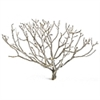 "Coral bush, 19-24"", case of three (shipping included!)"